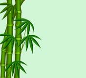 Der junge Bambus lizenzfreie abbildung
