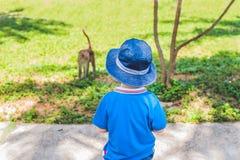 Der Junge betrachtet einen Affen Peildeck, Vietnam Stockbild