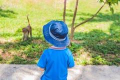 Der Junge betrachtet einen Affen Peildeck, Vietnam Stockfoto