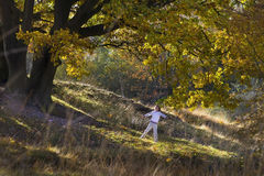 Der Junge, der mit goldenem Herbstlaub springt und spielt Stockfotos