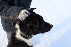 Der Junge eine Hand, die einen großen schwarzen Hund auf der Straße im Winter streicht, ist ein tapferes Kind und ein Tier stockfoto
