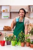 Der junge gut aussehende Mann, der zu Hause Blumen kultiviert stockfoto