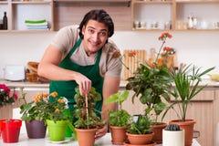 Der junge gut aussehende Mann, der zu Hause Blumen kultiviert lizenzfreie stockbilder