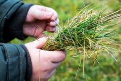 Der Junge hält das Gras in seinem hands_ stockfotografie