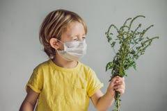 Der Junge ist zum Ragweed allergisch In einer medizinischen Maske hält er einen Ragweedbusch in seinen Händen Allergie zum Ambros lizenzfreie stockfotos