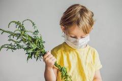 Der Junge ist zum Ragweed allergisch In einer medizinischen Maske hält er einen Ragweedbusch in seinen Händen Allergie zum Ambros stockfoto