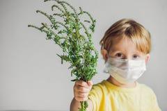 Der Junge ist zum Ragweed allergisch In einer medizinischen Maske hält er einen Ragweedbusch in seinen Händen Allergie zum Ambros stockbild
