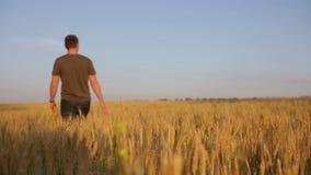 Der junge Mann geht entlang ein Feld des Roggens stock footage