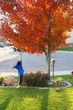Der Junge springend für Blätter Stockfoto