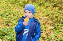 Der Junge tritt in den Herbstwaldpilzen zusammen Lizenzfreie Stockbilder