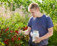 Der Junge wählt Beeren einer roten Johannisbeere von einem Busch in einem Garten aus Lizenzfreie Stockfotos