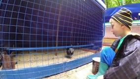 Der Junge zieht die Vögel im Zoo ein stock video