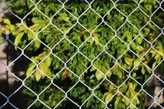 Der Käfig und die Ansicht der Natur Stockfotos