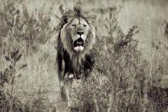 Der König Stockfoto