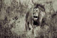 Der König Stockfotos