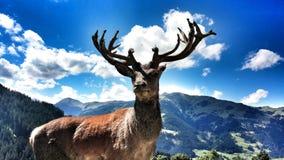Der König des Berges Stockfotografie