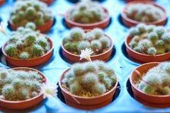 Der Kaktus Stockbild