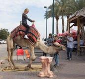 Der Kamel ` s Fahrer rollt einen Besucher auf einem Kamel in Yeriho in Israel Stockfotografie