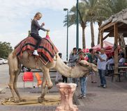 Der Kamel ` s Fahrer rollt einen Besucher auf einem Kamel in Yeriho in Israel Stockbilder