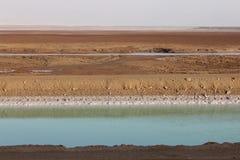 Der Kanal des Toten Meers Lizenzfreies Stockbild