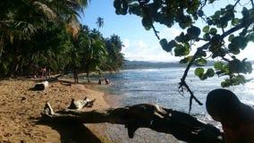Der karibische Strand lizenzfreie stockbilder