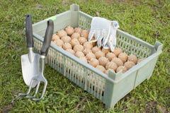 Der Kasten mit von Startwert für Zufallsgenerator potatoe Stockbild