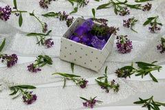 Der Kasten wird mit purpurroten Blumen auf der umfassten Oberfläche gefüllt Stockbild