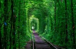 Der Kerl mit dem Mädchen gudlyayut Eisenbahntunnel des Liebesfrühlingswaldes Stockbilder