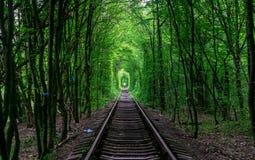 Der Kerl mit dem Mädchen gudlyayut Eisenbahntunnel des Liebesfrühlingswaldes Lizenzfreies Stockbild