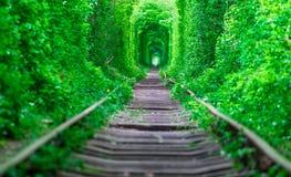 Der Kerl mit dem Mädchen gudlyayut Eisenbahntunnel des Liebesfrühlingswaldes Lizenzfreie Stockfotografie