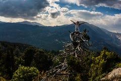 Der Kerl steht auf einem Baum, der über einer Klippe im Hintergrund der Berge wächst Kemer, die Türkei Stockfotos