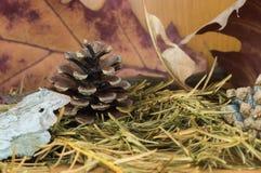 Der Kiefernkegel, der bis zum Herbst umgeben wurde, trocknete Tanne und Ahornblätter Lizenzfreie Stockfotografie