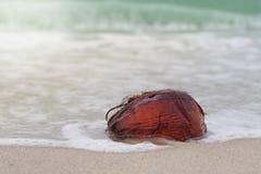 Der kleine Abdruck wird auf dem Strand gestempelt Stockfotos