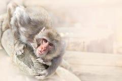 Der kleine Affe hat sich auf einem Klotz angeschmiegt und schaut vorwärts Stockbild