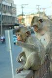 Der kleine Affe im Phra Prang Sam Yot Lopburi von Thailand Stockbilder