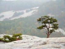 Der kleine Baum, der auf Felsen mit Berg wächst, schaukelt in Hintergrund Lizenzfreies Stockfoto