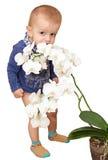 Der kleine blonde Junge riecht sorgfältig die weiße Blume von Lizenzfreie Stockfotos