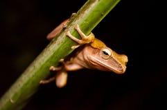 Der kleine Frosch, der den Stamm hält Stockfotos