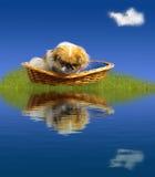 Der kleine Hund, der zu ihm schaut, ist Reflexion Lizenzfreies Stockfoto
