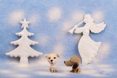 Der kleine Hund mit zwei Spielzeugen auf einem Blau verwischte Hintergrund stockfotos