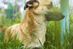 Der kleine Hund wird im Gras, der Hund isst Gras, um den Magen zu säubern gespielt stockfoto