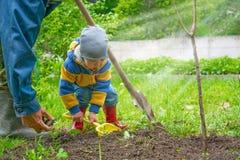 Der kleine Junge im Gartenbaum, wenig Grabungen sadit Zeltpfosten für Sämlinge stockfotografie