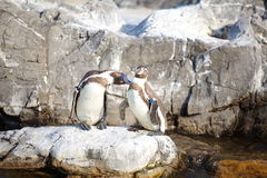 Der kleine Pinguin Stockbild