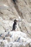 Der kleine Pinguin Lizenzfreie Stockfotos