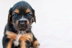 Der kleine süße kleine Hund sucht Sie lizenzfreie stockfotografie