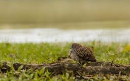 Der kleine Vogel. Stockfotografie