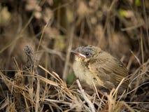Der kleine Vogel auf dem Land Lizenzfreies Stockbild