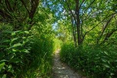 Der kleine Weg - Landschaft, Ontario Lizenzfreie Stockfotos