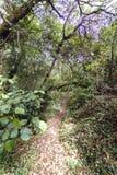 Der kleine Weg, der mit Eukalyptus bedeckt wird, verlässt in einem Wald mit Losen Stockfotos