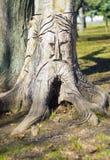 Der kluge alte Baumstumpf Stockfoto